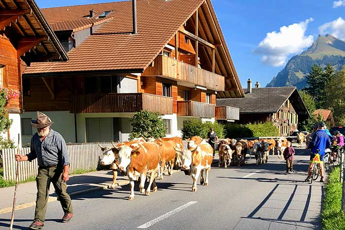 Switzerland Family Multi-Adventure Tour - 20s & Beyond | Backroads