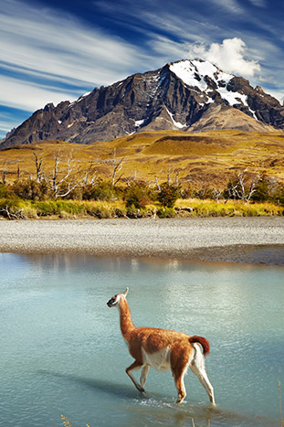 Wildlife, Chile Patagonia