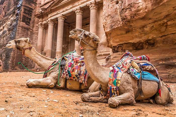 Camels at Petra Temple site