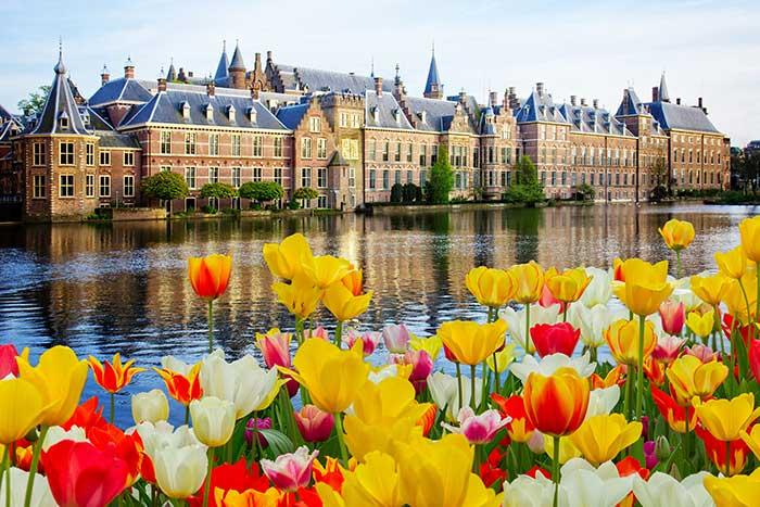 Tulips, Netherlands