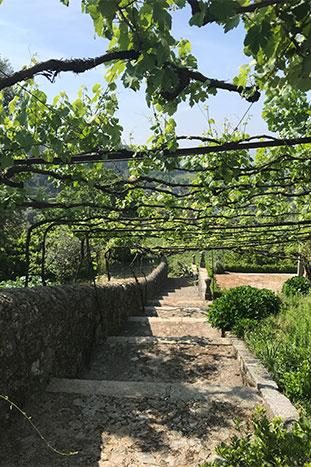 Vines in a garden, Camino de Santiago, Portugal