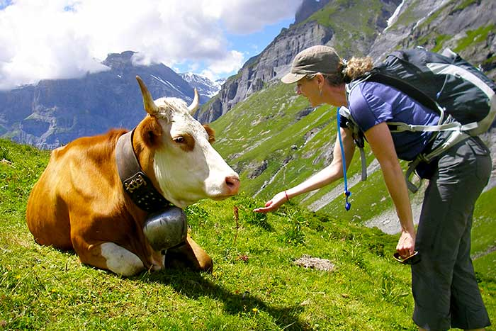 Woman hiker greeting a cow in the Swiss Alps