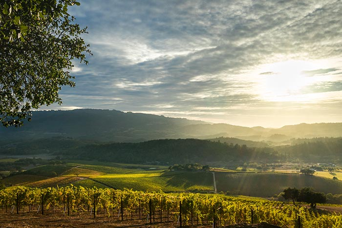 Napa Valley & Sonoma Active Culinary Family Walking & Hiking Tour - 20s & Beyond | Backroads