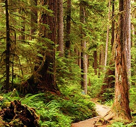 Trips in Olympic National Park