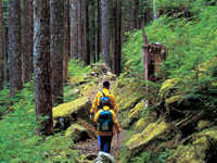 Hiking Trips in Olmpic National Park