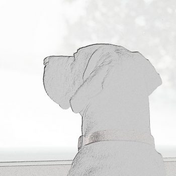 Black and white wall art featuring a labrador-great dane mix looking out a window