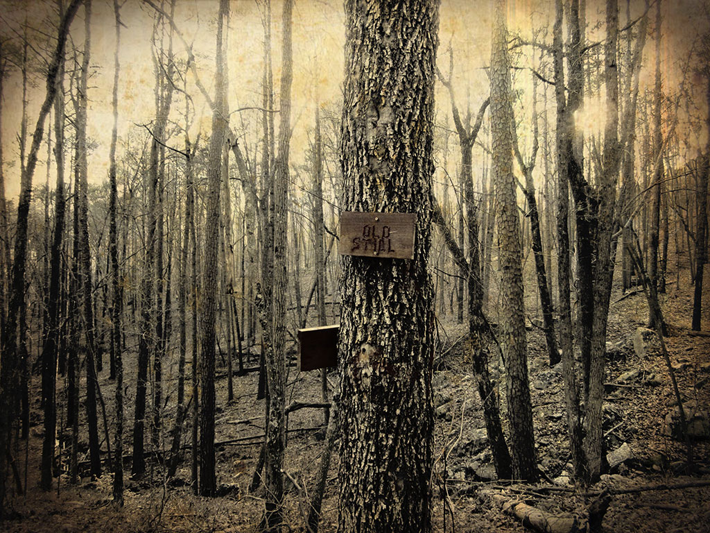 "Urban Farmhouse Style Art featuring a dark forest and sign that says ""Old Still"""