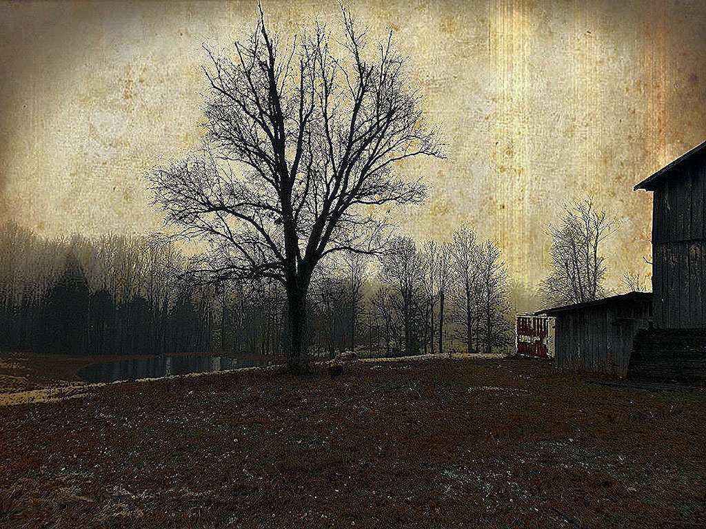 Modern-Farmhouse-Wall-Art-The Tree-Backwater-Stills