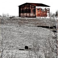 Sophisticated Farmhouse Artwork featuring a rusty metal barn and a black cow on a hillside