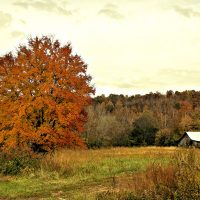 Home and Wall Decor featuring Autumn orange and red