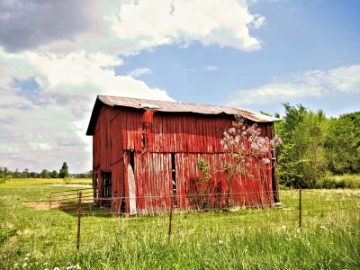 Colorful Wall Art featuring Red Barn and Purple Spring Blossoms
