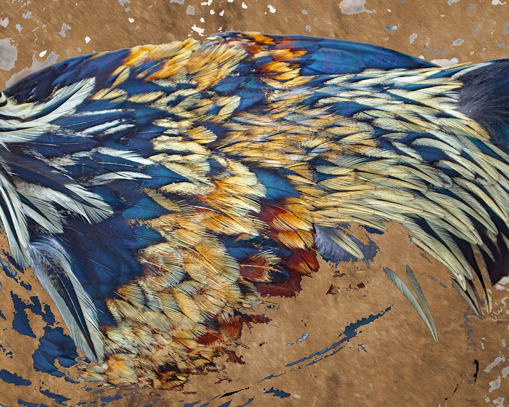 Contemporary wall art featuring blue and gold chicken feathers