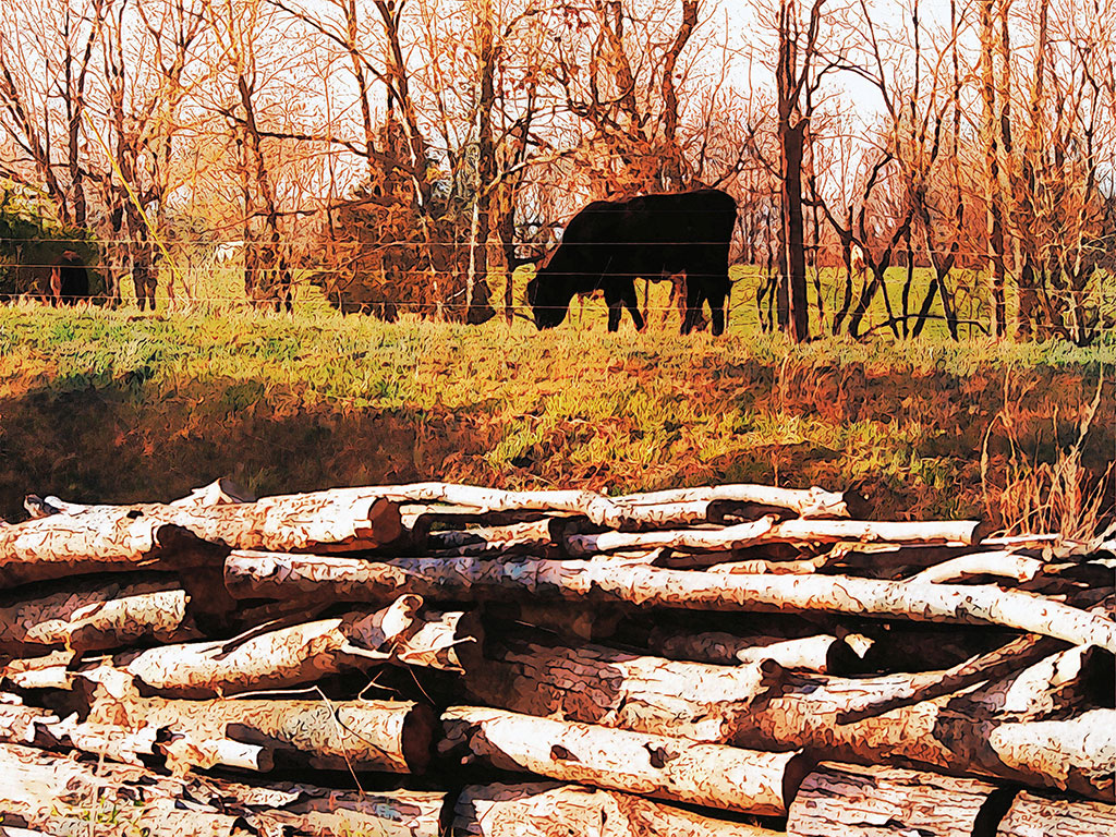 Colorful-Cow-Wall-Art-Grazing-Backwater-Stills