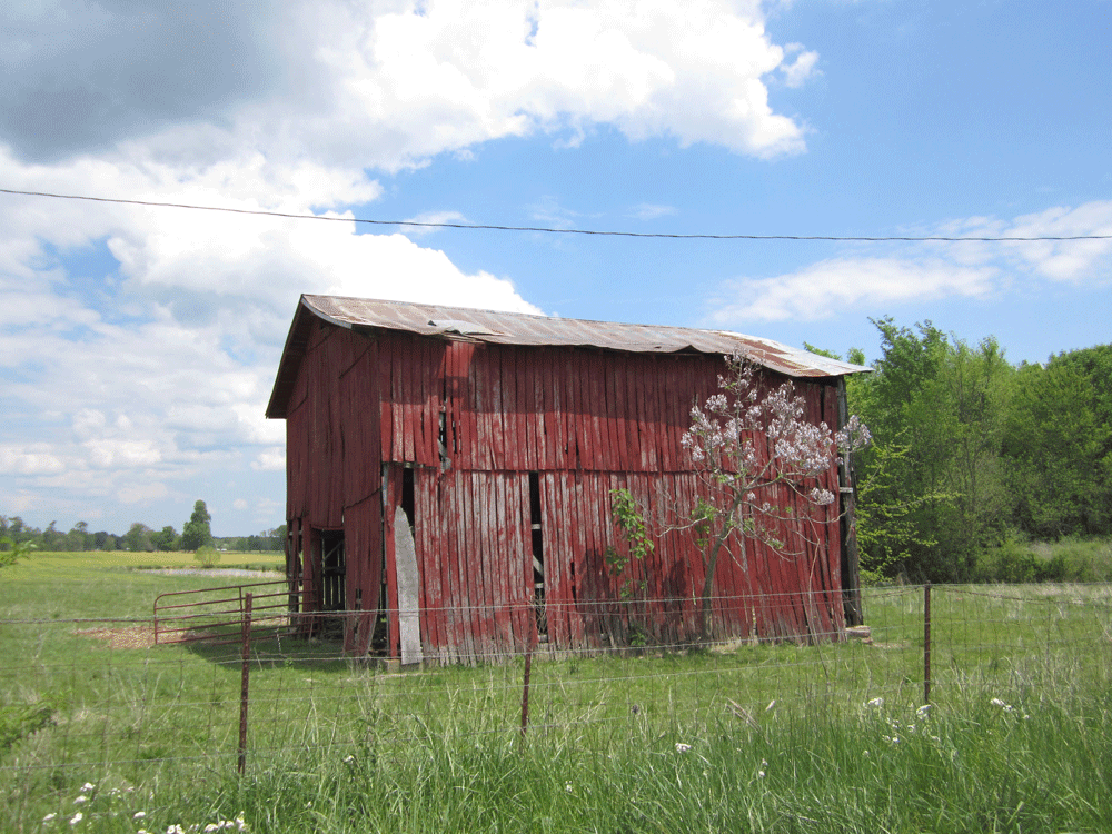 Original image of red barn with purple spring blossoms behind barbed wire fence