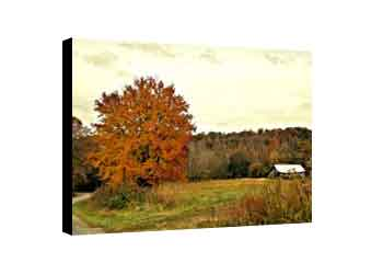 Autumn canvas wall decor for the home with sugar maple and old tobacco barn