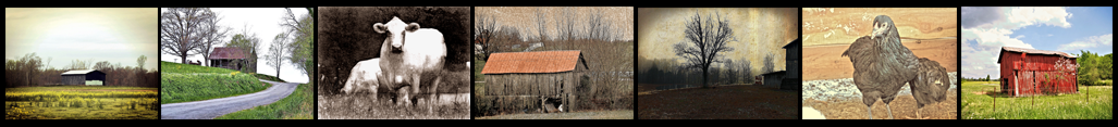 Filmstrip of seven images by Backwater Stills for website homepage and wall art page
