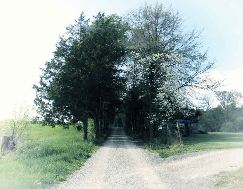Original photo of tree lined country lane