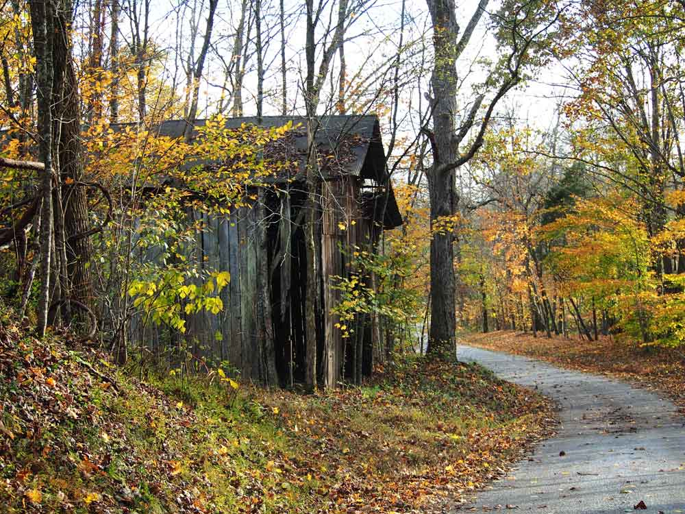 Old wooden barn surrounded by golden fall foliage on a winding country road