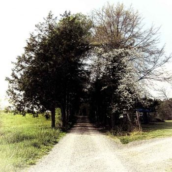 Contemporary Wall Art featuring a tree lined country road