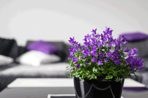 Purple flowers and pillow in Using Color Psychology in Decorating article