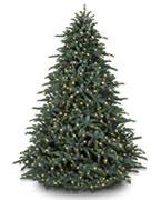$900 - $1200 Trees