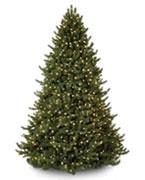$600 - $900 Trees
