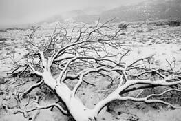 Snags & Snow 10 by Bob Neiman