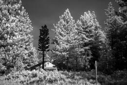 Church Tree by George Katzenberger