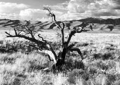 Lonesome Tree by Carolyn S. Cogan