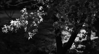 Japense Garden by Dean Forbes