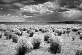 Desert Grass by Dennis Frates