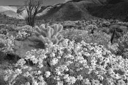 Desert Wild Flowers by Dennis Frates