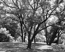 New York Botanical Garden - Loop Road by Hugh Holt