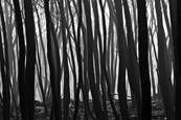 Black Saturday 5 by Scott Haskins