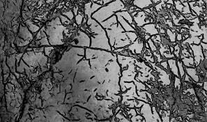 Dendritic by Bernard Werner