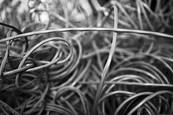 Insulated Wire 5 by Dave Sova