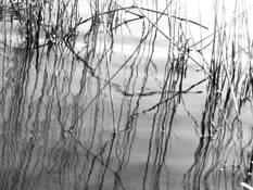 Reed 1 by Sophia Koopman