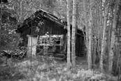 Old Bettles Cabin by Sam Ward