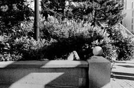 Resting Place by Allen D. Crooks