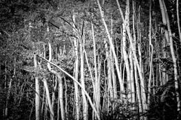 Autumn Trees by Aaron Marko