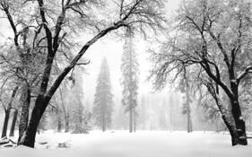 Arching Oaks in Winter by Lane Wilson