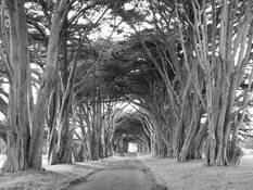 Tree Arch by Teresa Baker