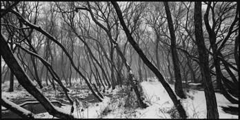 Trees #1 by Shinya Ichikawa