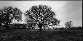Trees #2 by Shinya Ichikawa
