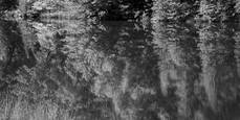 Reflection by Robert Hecht