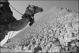 Giza by Eddie Wexler