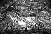 Rice Terraces by Louis Montrose