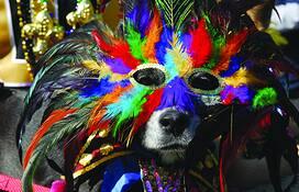 Krewe of Barkus (Mardi Gras) by Steve Spehar
