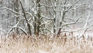 Bones in Snow by Carol Rooney