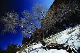 Hillside Tree by Don Bierman